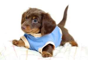 dog-wallpapers-t-shirt